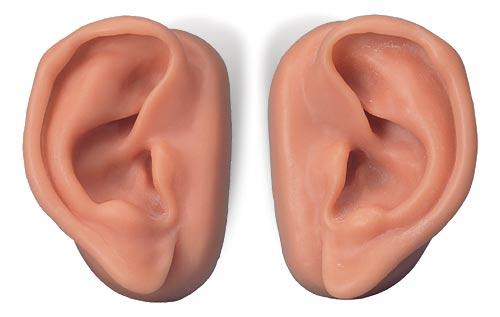 【送料無料】【無料健康相談 対象製品】3B社 鍼灸シミュレータ 耳鍼モデル10人用セット (n16)