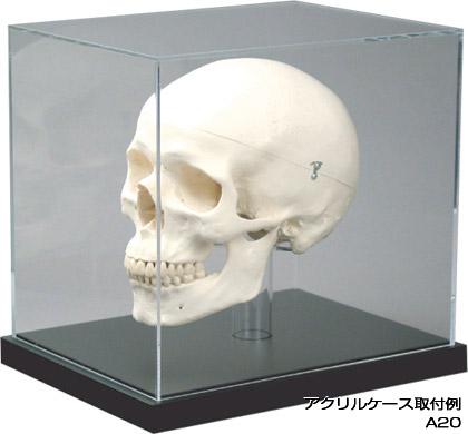 【送料無料】展示ケース- (zzd0002)   【本体別売り:部品のみの販売となります】