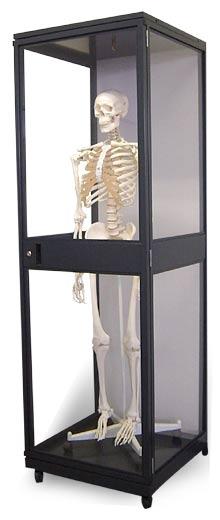 【送料無料】【無料健康相談付】3B社 等身大骨格モデル用展示キャビネット(ZZD0003)