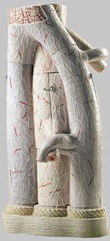 【送料無料】【無料健康相談 対象製品】ソムソ社 動静脈の繊細構造模型 hs25