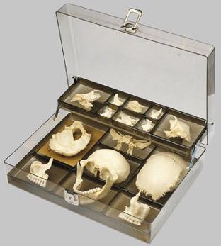 【送料無料】【無料健康相談 対象製品】ソムソ社 頭蓋骨分離模型 qs9_1