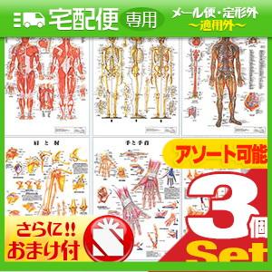 「検査」医道の日本社 人体解剖学チャート ポスター 選べる3枚セット パネルなし+さらに選べるおまけ付き