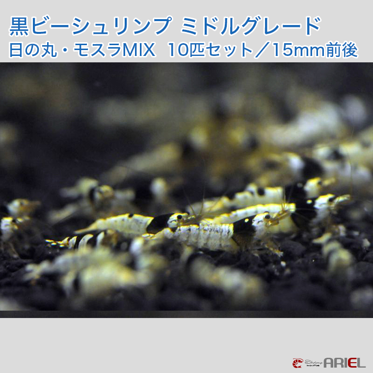 黒ビーシュリンプ ミドルグレード 日の丸・モスラMIX 10匹セット(1匹/約14mm)