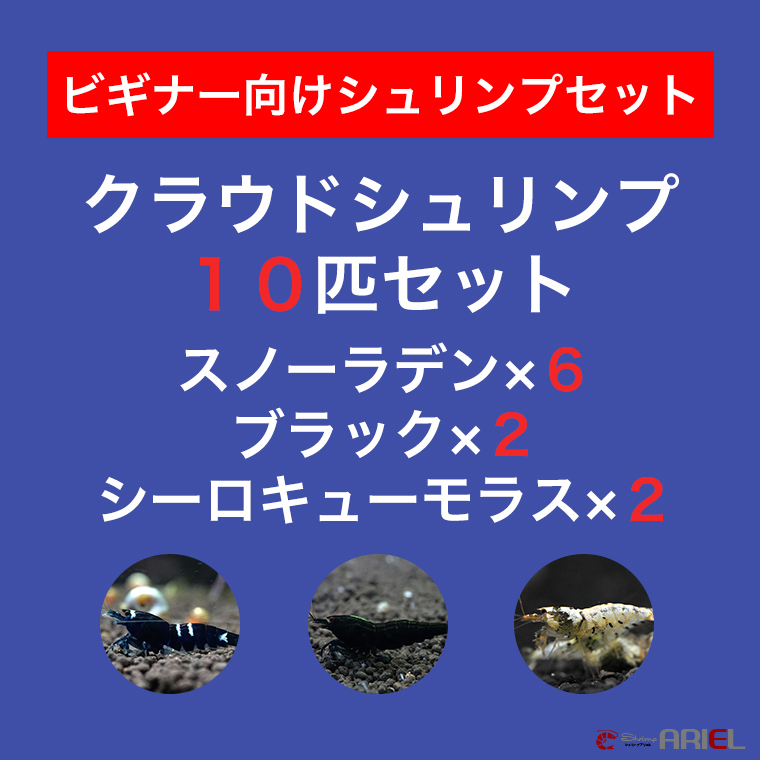 【クラウド10匹セット】スノーラデン6匹+クラウドブラック2匹+シーロキューモラス2匹