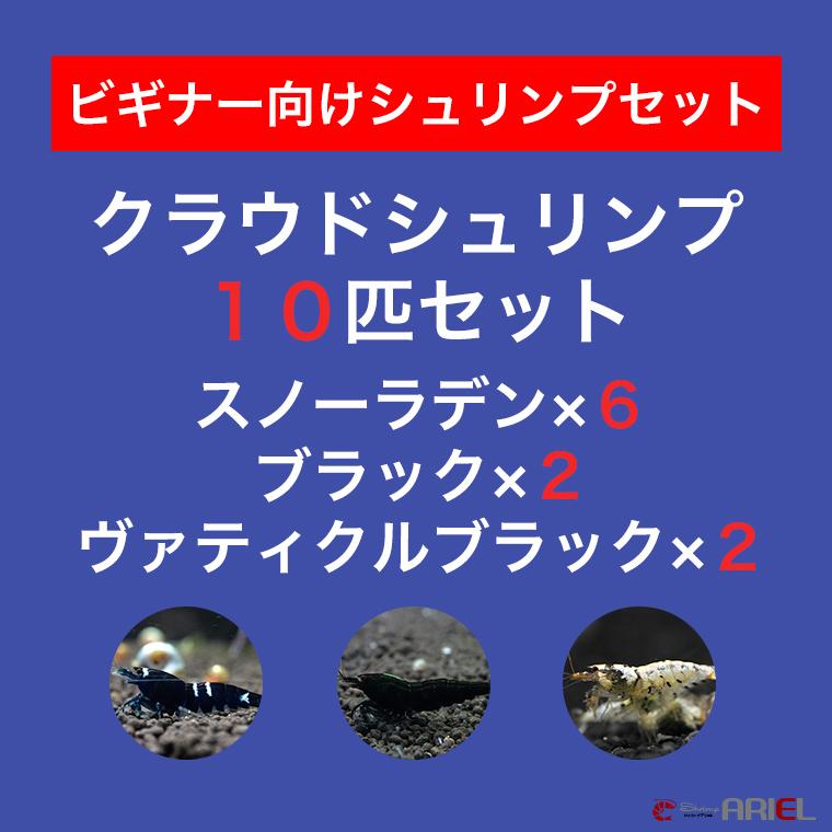 【クラウド10匹セット】スノーラデン6匹+クラウドブラック2匹+ヴァティクルブラック2匹