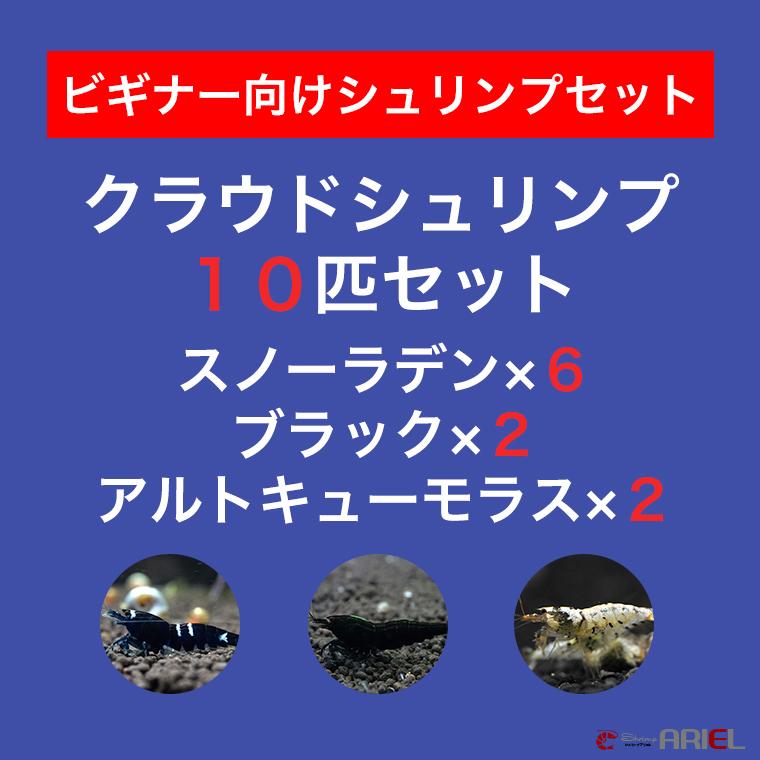 【クラウド10匹セット】スノーラデン6匹+クラウドブラック2匹+アルトキューモラス2匹