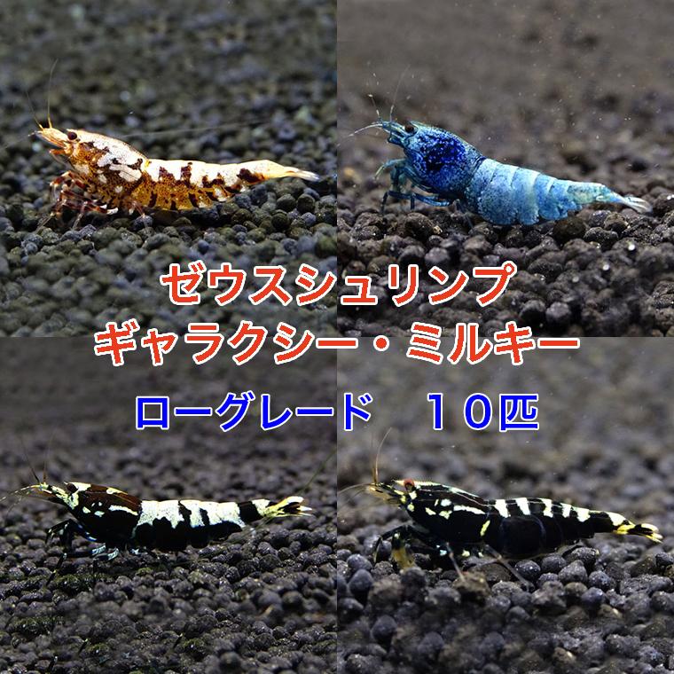 ゼウスシュリンプ  ギャラクシー・ミルキー  ローグレード 10匹(1匹/約1.5cm)