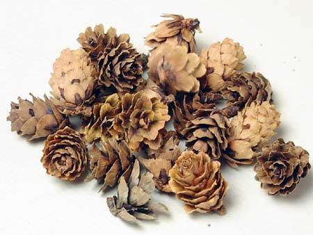 ◆ドライフラワー グイの実ナチュラル 少量パック/木の実・クリスマス・花材・素材・ドライフラワー・リース(大地農園)