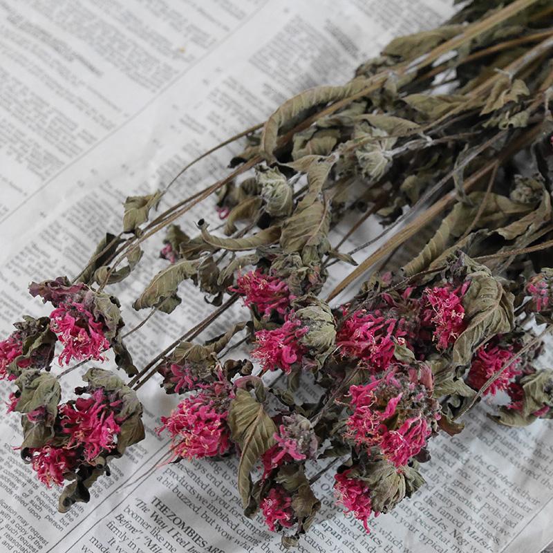 Bergamot (monarda) / Hokkaido from dried flowers, flowers, lease, handmade,  domestic, materials, material and natural Interior herbs