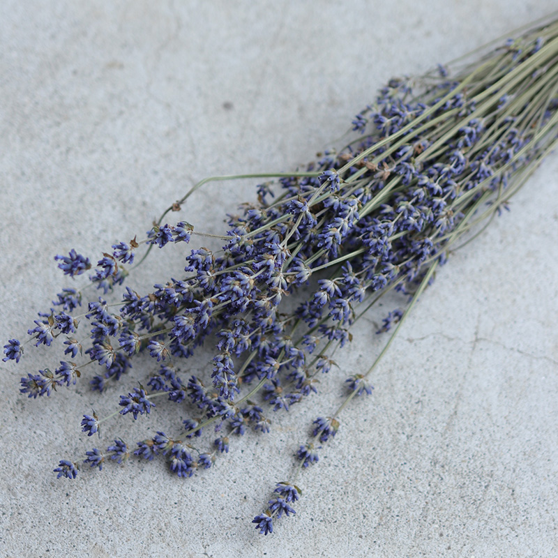 Furano from Lavender 4 / Hill purple and dried flowers, flowers and herbs