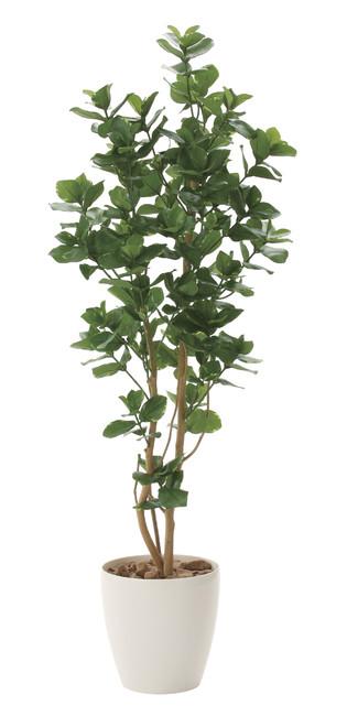 【送料無料】クルシア (人工観葉植物) 高さ160cm 光触媒 (719A360)(店舗用品/光触媒 人工観葉植物・造花・フェイクグリーン/フロア(鉢型)用/125~160cm)