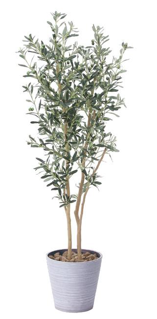 【送料無料】オリーブ (人工観葉植物) 高さ160cm 光触媒 (814A330)(店舗用品/光触媒 人工観葉植物・造花・フェイクグリーン/フロア(鉢型)用/165cm以上)