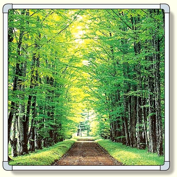 【送料無料♪】フォトパネル1 林道 小サイズ 870×870mm (安全用品・標識/安全標識/環境美化標識)