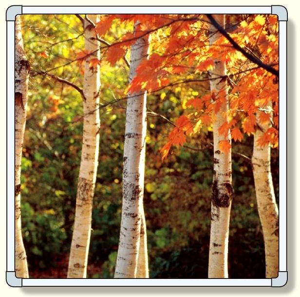 【送料無料♪】フォトパネル 木立 大サイズ 1740×1740mm (安全用品・標識/安全標識/環境美化標識)