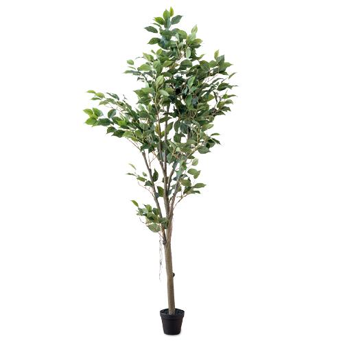 フィカスツリー PVC PE H162cm