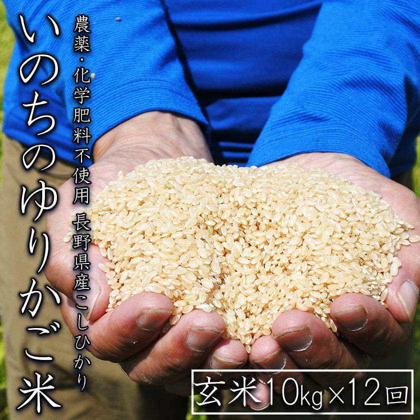 【定期配送】無農薬 玄米 コシヒカリ いのちのゆりかご米 10kg×12回(合計120kg)【信州伊那谷 あきづ農園】