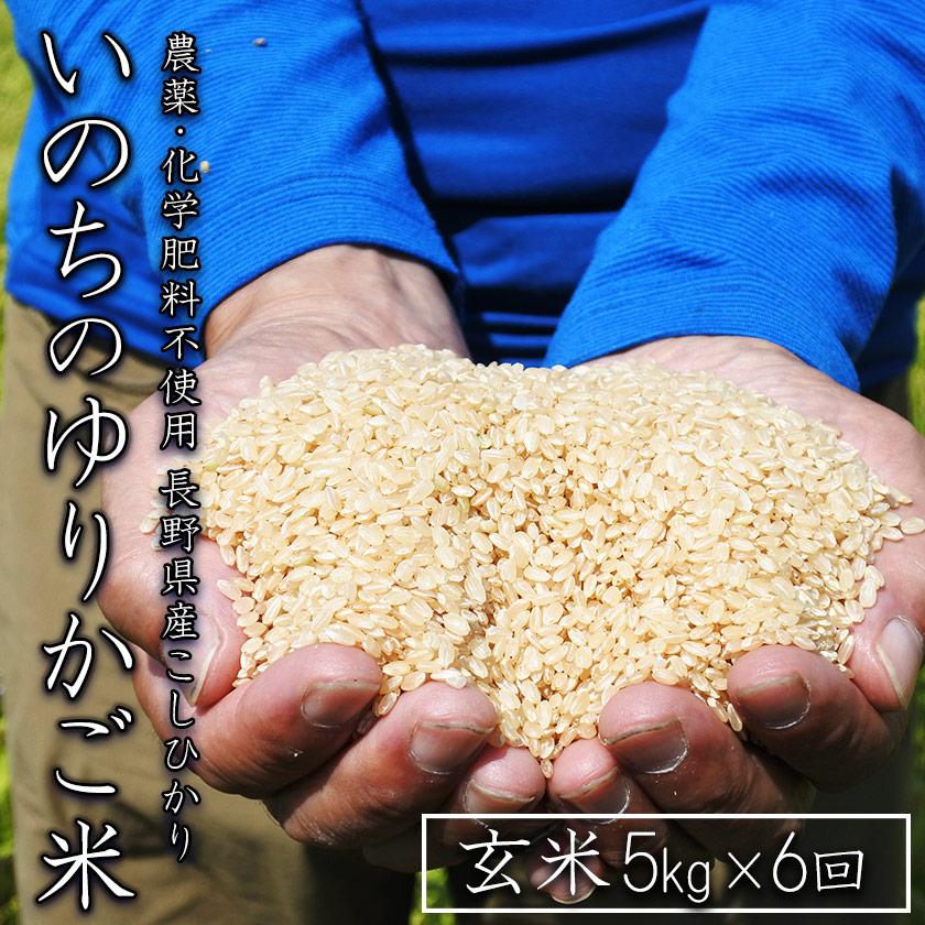 【定期配送】無農薬 玄米 コシヒカリ いのちのゆりかご米 5kg×6回(合計30kg)【信州伊那谷 あきづ農園】