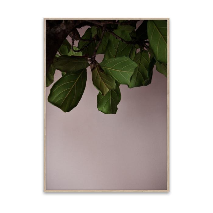 【ポスター】GREEN LEAVES ポスター 50cm×70cm / PAPER COLLECTIVE