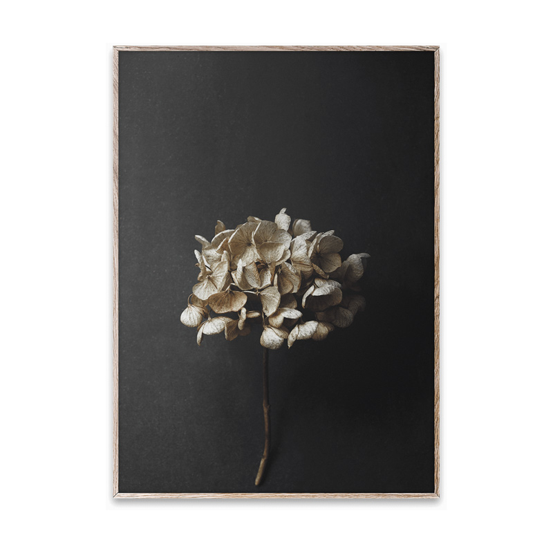 【ポスター】STILL LIFE 04 (Hydrangea) ポスター 50cm×70cm / PAPER COLLECTIVE