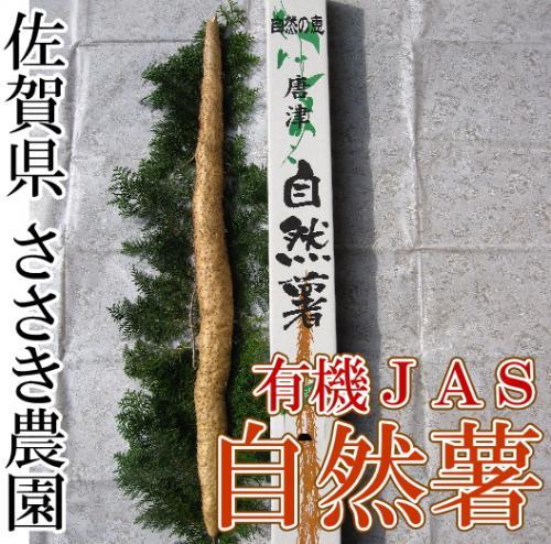 【クール便】自然薯 贈答用1本(約1kg前後)(佐賀県 ささき農園)有機JAS無農薬野菜 産地直送