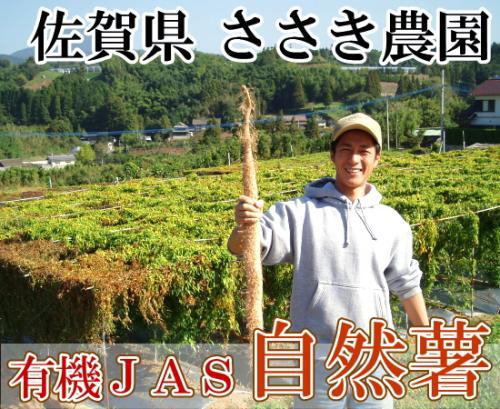 自然薯 家庭用約2kg(3~6本)(佐賀県 ささき農園)有機JAS無農薬野菜・送料無料・産地直送・オーガニック・訳あり・お徳用