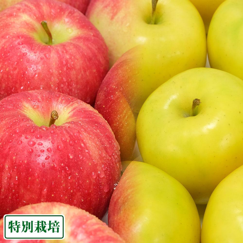 りんごセット 秀品 10kg 特別栽培(無・無) (青森県 北上農園) 産地直送