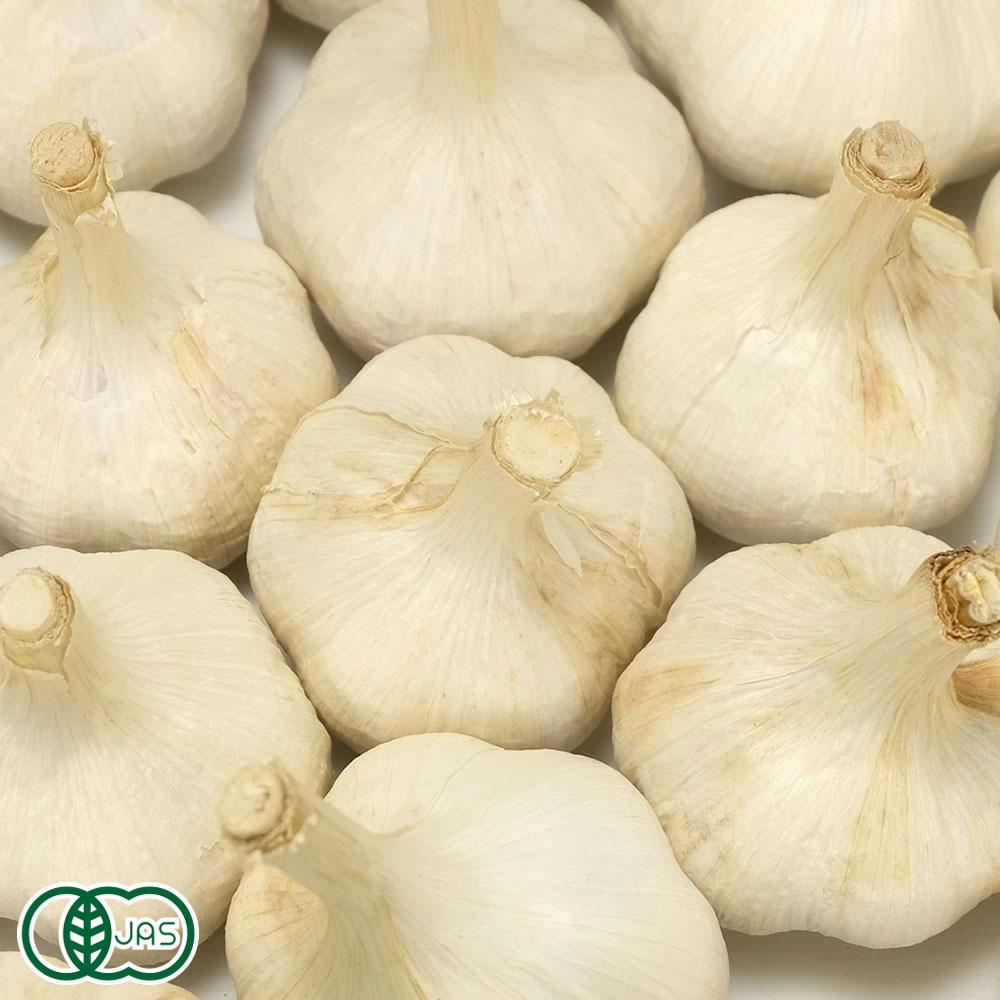 乾燥にんにく 福地ホワイト六片種 10kg 有機JAS (青森県 中里町自然農法研究会) 産地直送