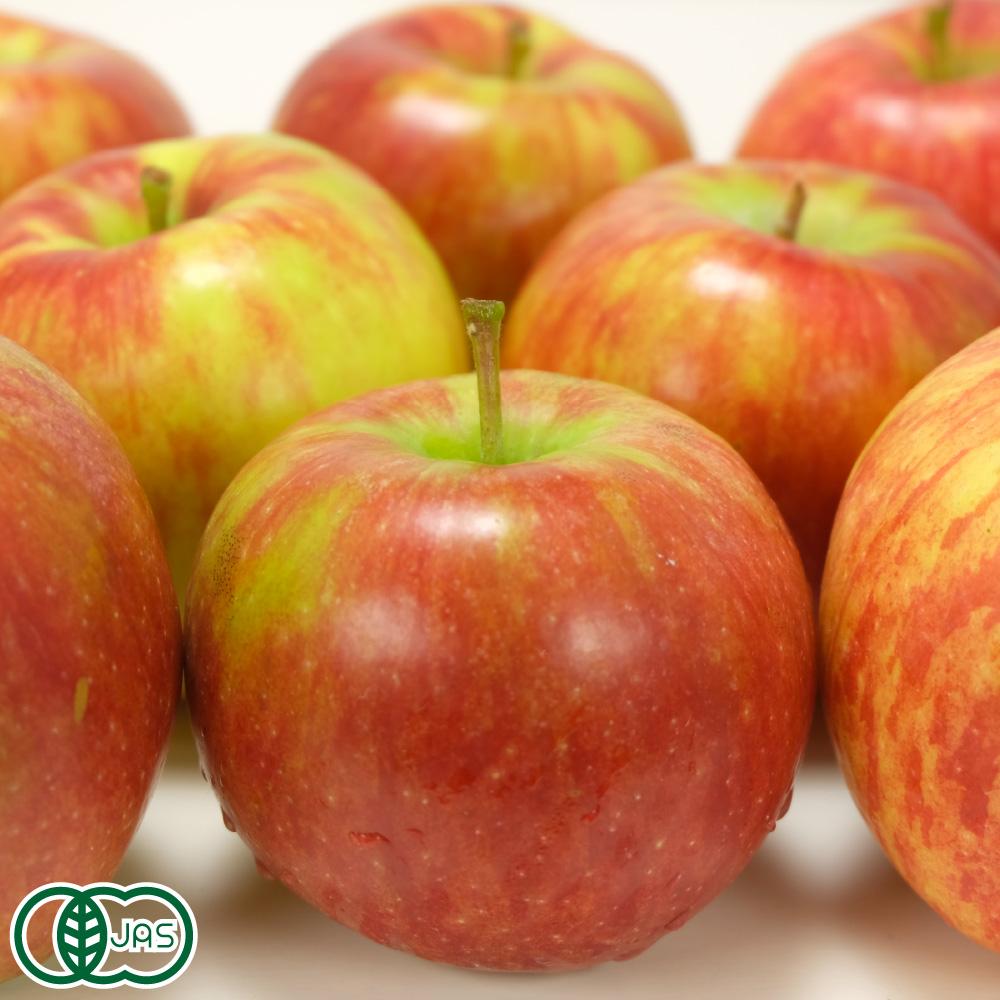 卓越 化学合成された農薬 肥料を一切使わない 青森 無農薬 りんご が 送料無料 予約商品 青森県 産地直送 赤 3kg箱 超歓迎された 家庭用 有機JAS 北上農園 有機