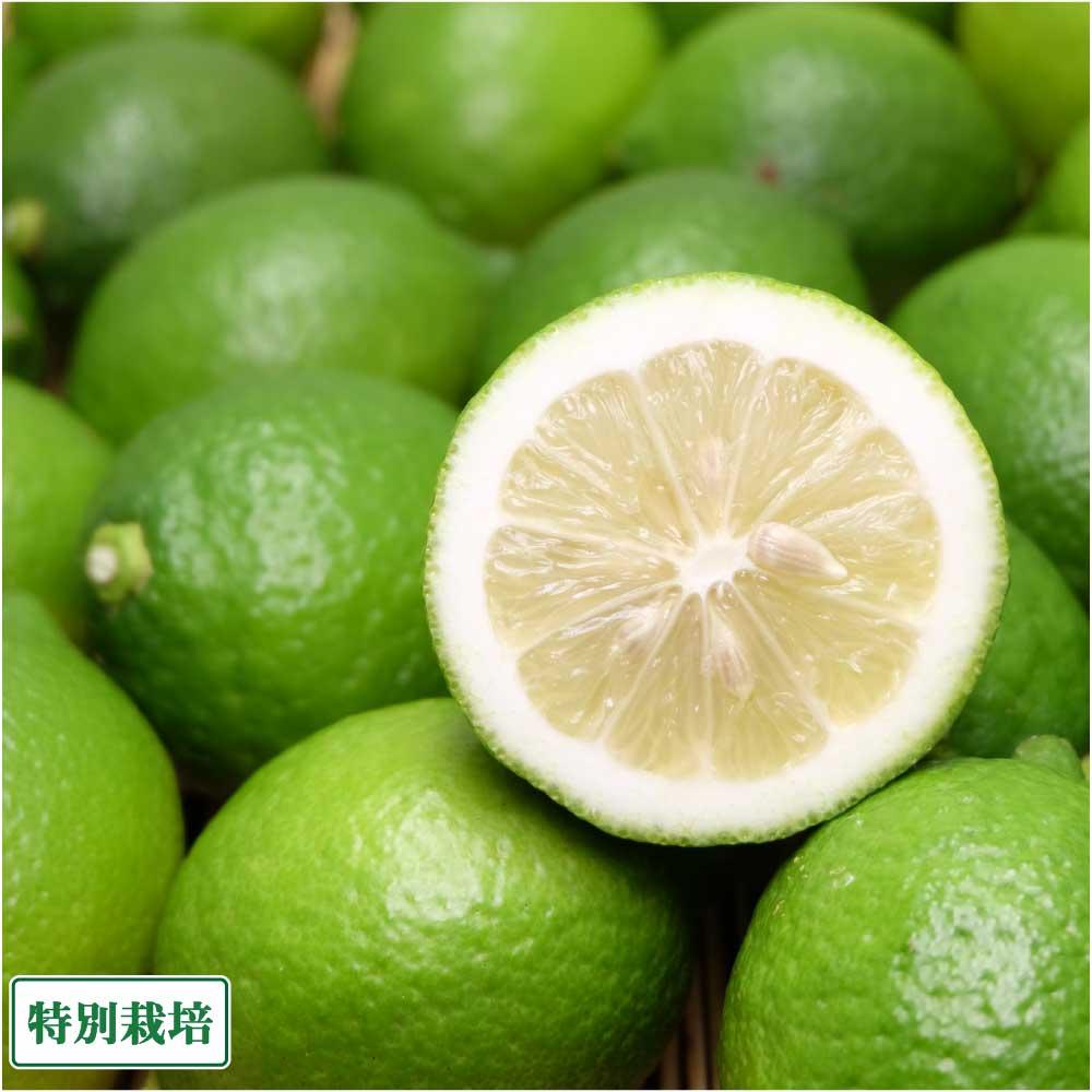農薬を最低限に抑え化学肥料を一切使用しない レモン 7kg が 送料無料 安売り 青 県特別栽培 産地直送 熊本県 A品 オレンジヒルズ 秀逸
