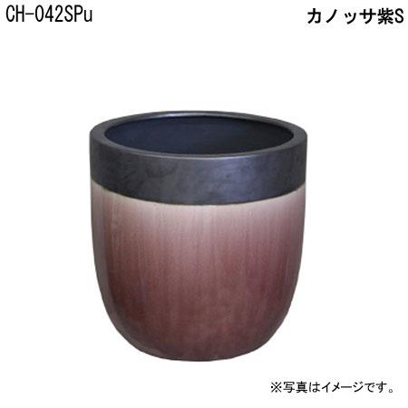 カノッサ紫S CH-042SPu