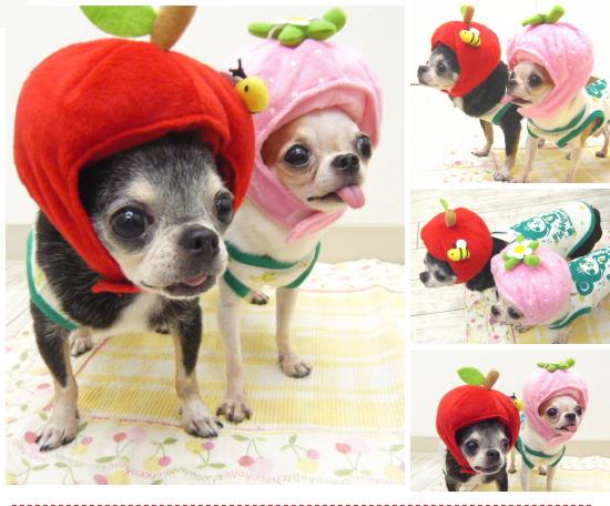 美容水果帽子尺寸 (只吉娃娃小狗或武为吉娃娃狗帽子服装或武里也)