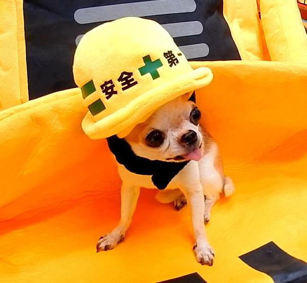 【楽天市場】ハーネス 小型犬 可愛いの通販