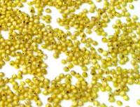 無農薬(化学合成農薬不使用)栽培 イタリアIMC認証品ミリオ あわ 粟 500g×18 うるち種 送料無料