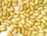 ●無農薬栽培 有機JAS もち玄米 1kg×20 送料無料商品取り寄せのため、在庫確認後ご連絡いたします。長期欠品の際はキャンセルさせていただく場合がございます。モチ玄米 餅玄米