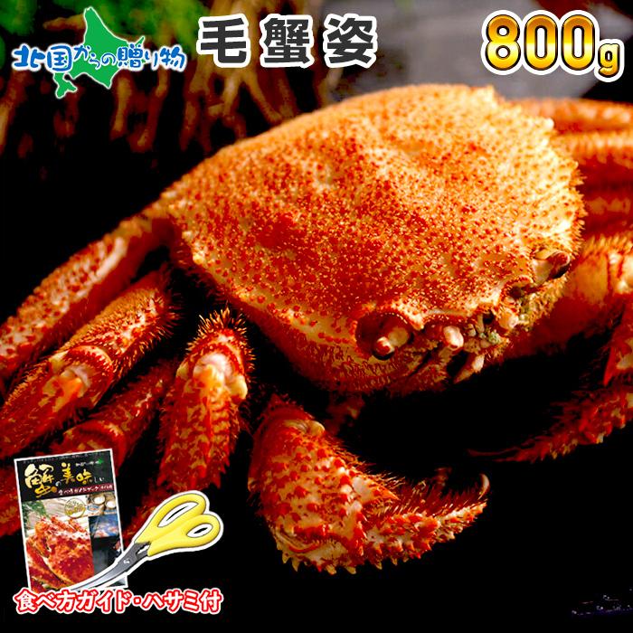 毛蟹姿 800g かに カニ 蟹 蟹姿 毛ガニ けがに 蟹味噌 かにみそ カニ味噌 ギフト すがた 北国からの贈り物 加藤水産 送料無料