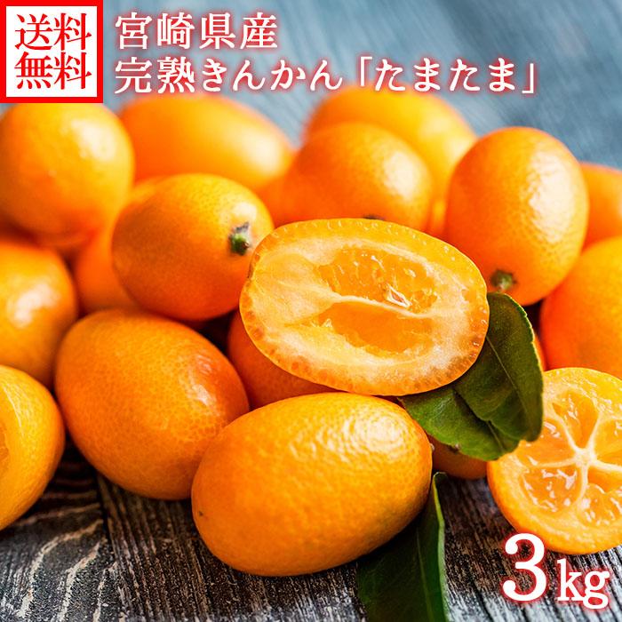宮崎県産 完熟きんかん たまたま 約3kg きんかん 金柑 柑橘 送料無料 ◆出荷予定:2月初旬