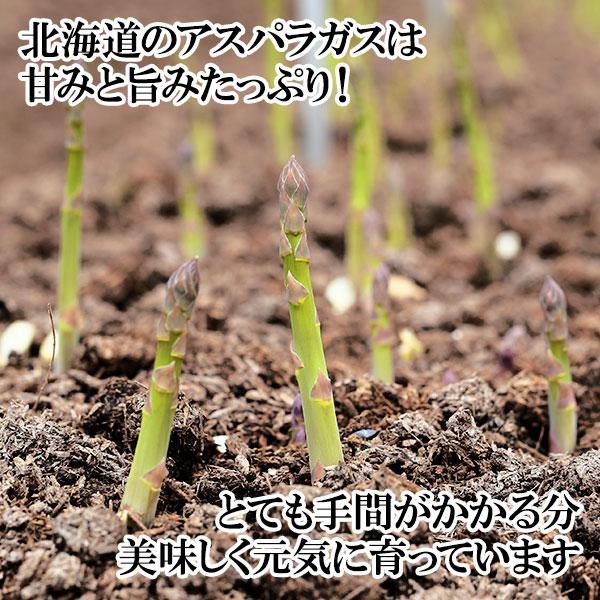 北海道産 グリーンアスパラガス Lサイズ 1kg 北海道産直  ◆出荷予定:5月中旬