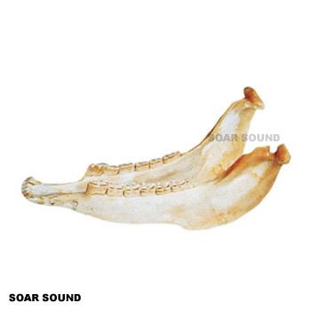 テージョ キハーダ ( ロバの下顎の骨 ) アンデス 楽器 TG-L08 体鳴楽器 打楽器 ヴィブラスラップ ビブラスラップ