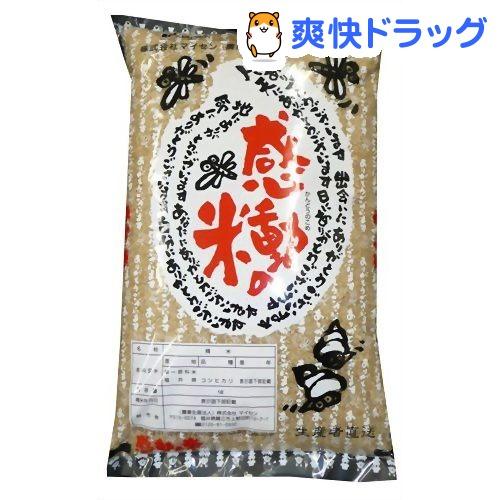 売却 マイセン 感動の米コシヒカリ 玄米 3kg 定番スタイル