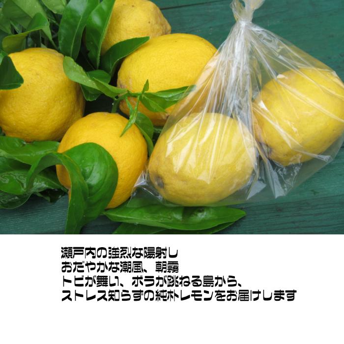 無農薬・草生。潮の香レモン、スモールサイズ(小玉)30~50個、バラ詰め、 4kg  送料無料 国内消費レモンの 1パーセントに満たない超奇跡のレモンです。美箱・朝採り直送・葉付き。