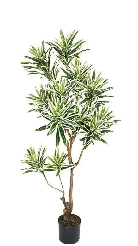 【ソングオブインディア・人工植物・ドラセナレフレクサ】送料無料 フェイクグリーン インディア1250