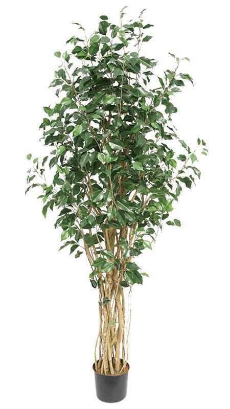 【フィッカス・ベンジャミナ・人工植物・造花】送料無料 フェイクグリーン ベンジャミン1800