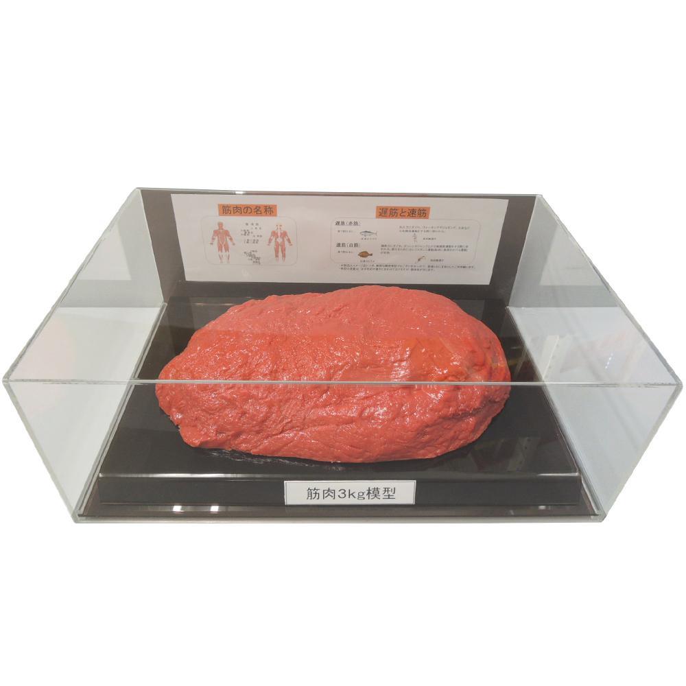 筋肉模型フィギュアケース入 3kg IP-988おすすめ 送料無料 誕生日 便利雑貨 日用品