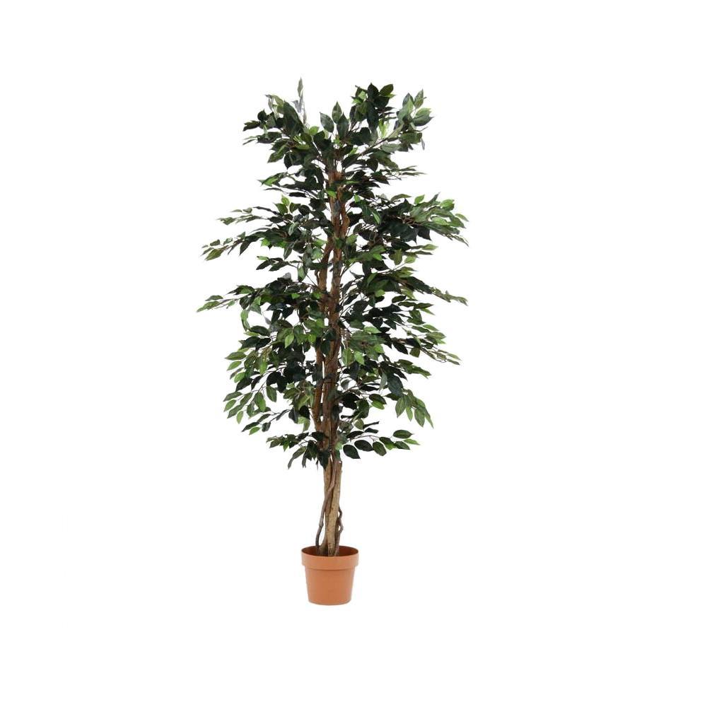 日用品 便利 ユニーク 観葉植物 フィカス 1124 A 52662