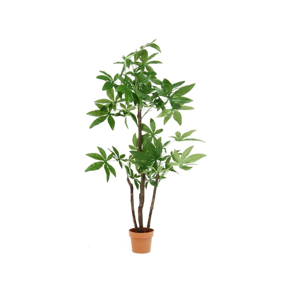 正規品販売! パキラ 観葉植物 スタンダード 52666:創造生活館-花・観葉植物