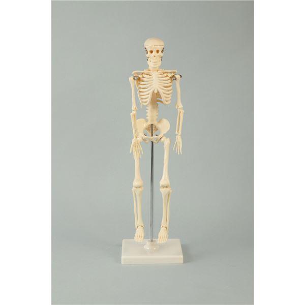 生活日用品 雑貨 (まとめ買い)人体骨格模型 42cm 【×5セット】