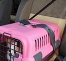ペット キャリーバッグ シートベルト 固定機能付き 安心 快適 キャンピングキャリー ダブルドア M ブラウン(BR)