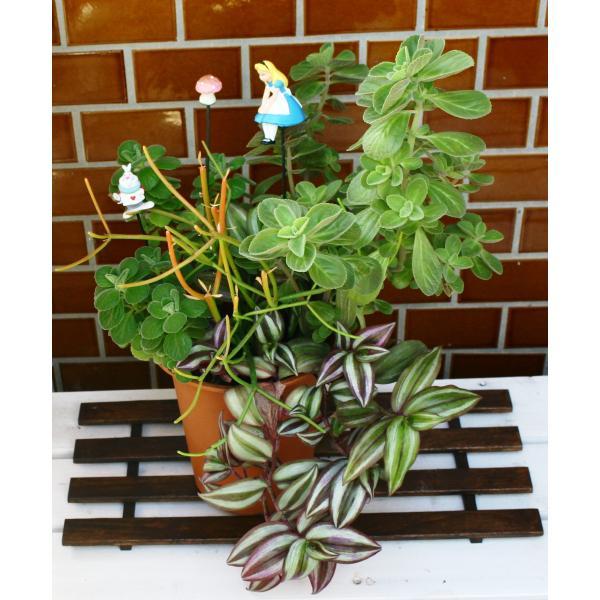 季節に合わせたオリジナル寄せ植えはいかがですか? いかようにもお造りできますので、用途とご予算をお知らせ下さい。 開運★ハッピー・ポットBIG