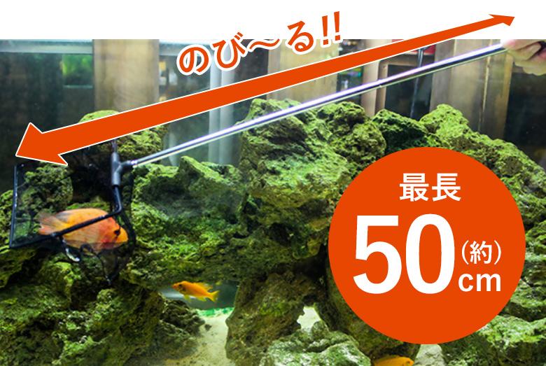 [] 水槽網 伸縮 最大 約50cm 水槽ネット 観賞魚用ネット 網 ネット 水槽 飼育 熱帯魚 金魚 メダカ 掃除 ゴミ取りメンテナンス