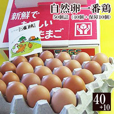 放し飼いののびのびとした環境で育った 鶏 さんたちの産んだ卵だから とぉっても元気です お取り寄せグルメ 放し飼い 自然卵 一番鶏 結婚祝い 50個詰 40個 破損保障分10個 鶏卵 千葉県産 送料無料お手入れ要らず ※ 卵 玉子 ※冷凍限定商品とは同梱できません 小見川の地卵 香取市 別途送料がかかります 冷蔵 庭先たまご タマゴ 限定配送